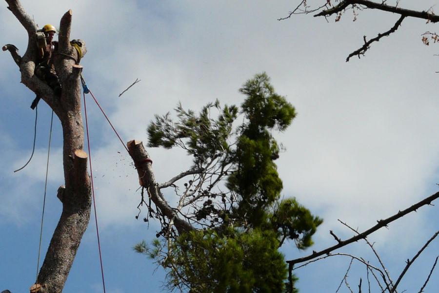 couper arbre tronçonneuse